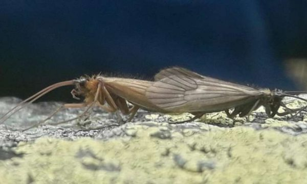 Insekti nga Kosova bëhet lajm në botë